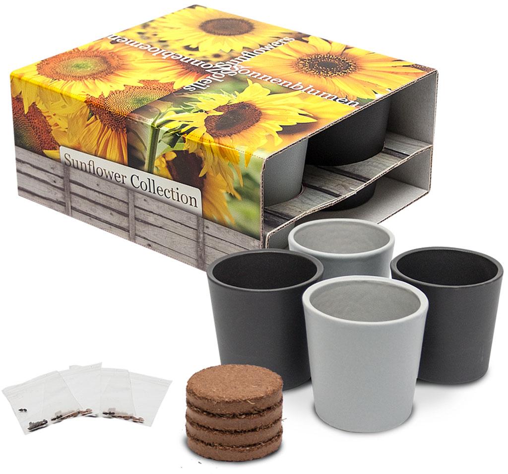 4 pots en céramique, des tournesols